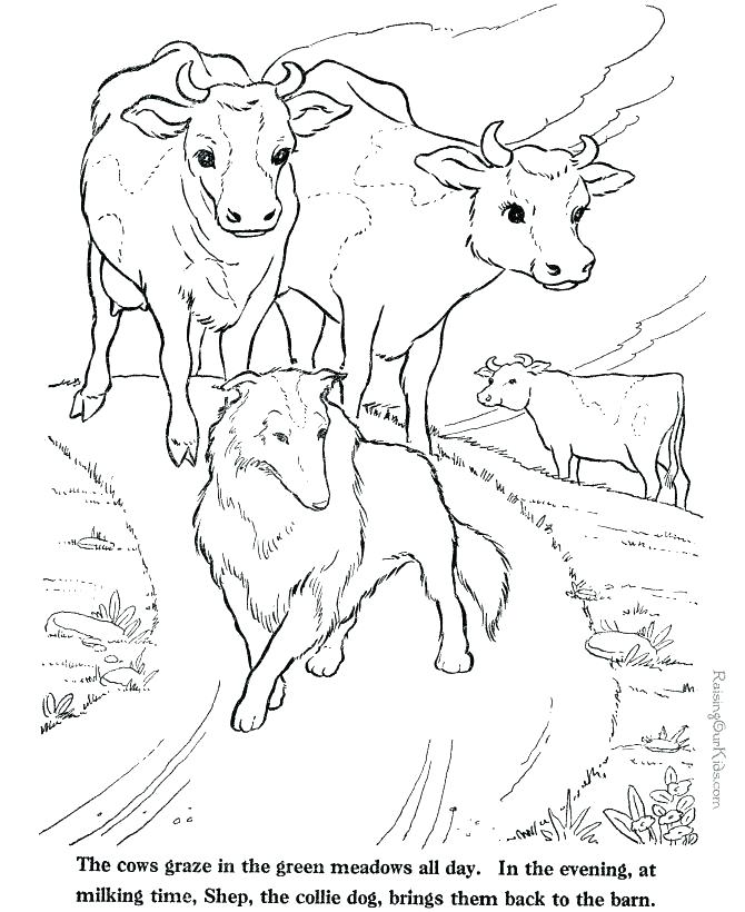 670x820 Cows Coloring Pages Coloring Pages Online Page Cow Item Nativity