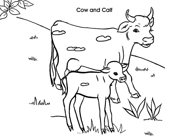 600x450 Dairy Cow And Calf Coloring Pages