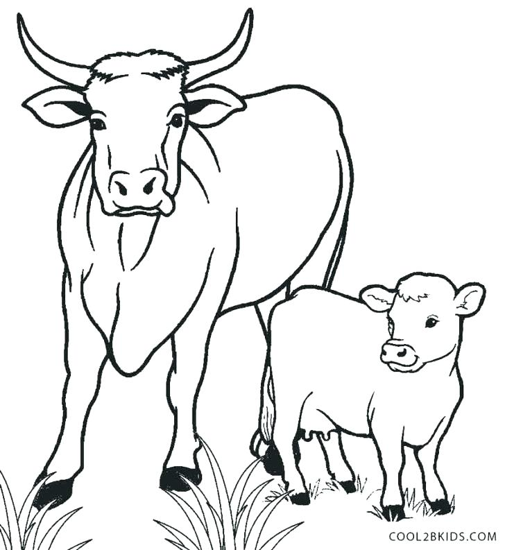 728x793 Golden Calf Coloring Page Calf Coloring Pages Printable Cow