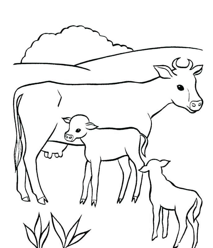 687x800 Coloring Pages Cow