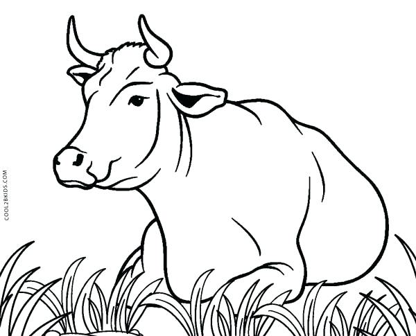 600x485 Cows Coloring Pages