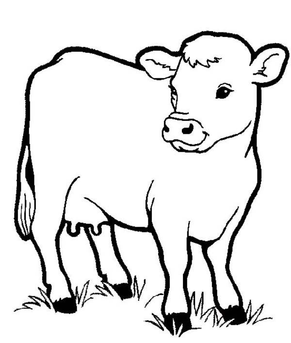 600x707 Cow Coloring Pages For Preschool Healthy Milch In Farm Animal Page