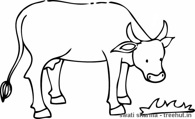 Cow Coloring Pages At Getdrawings Com Free For Personal Use Cow