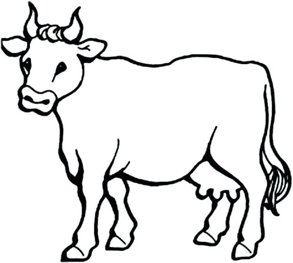 600x538 Cows Coloring Pages Picture Of Milch Cow Coloring Page Free