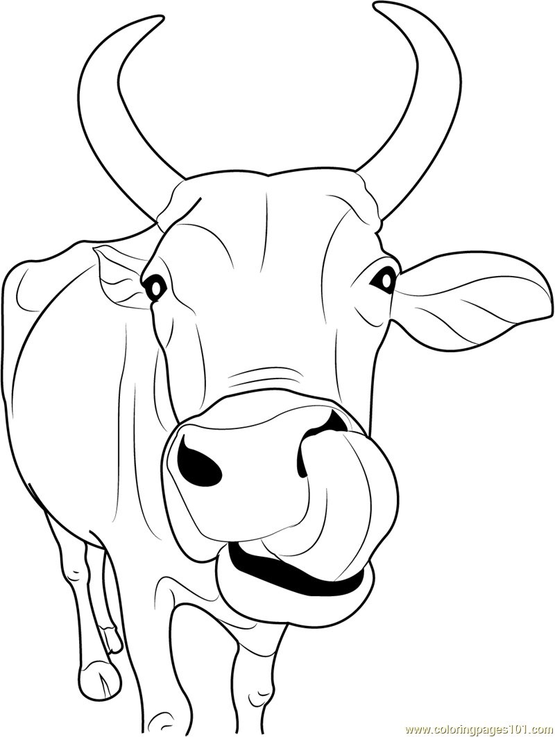 800x1063 Indian Cow Face Coloring Page