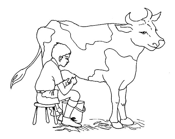 600x475 Jokes Of Milking Cow Coloring Pages Color Luna