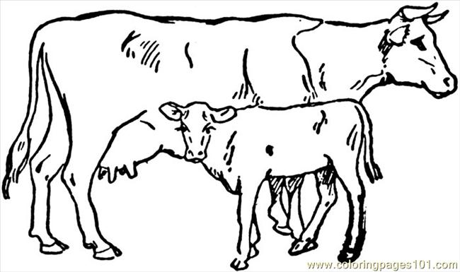 650x385 Cow Coloring Pages Free Cow Coloring Page Free Cow Coloring