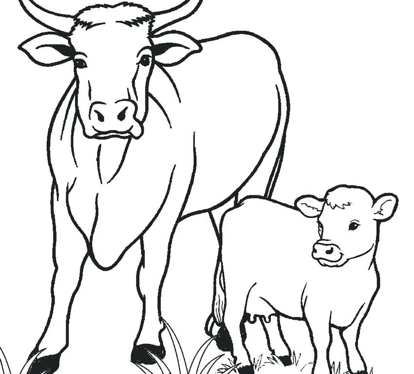 850x768 Cow Coloring Pages Cattle Breed And Page Is Cattle Breed Coloring