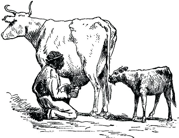 600x463 Cow Coloring Pages Sketch Farmer Milking Cow Coloring Pages