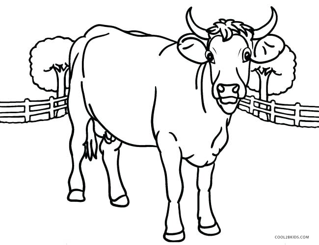 650x500 Cow Coloring Picture H Coloring Sheets Plus Baby Cow Coloring