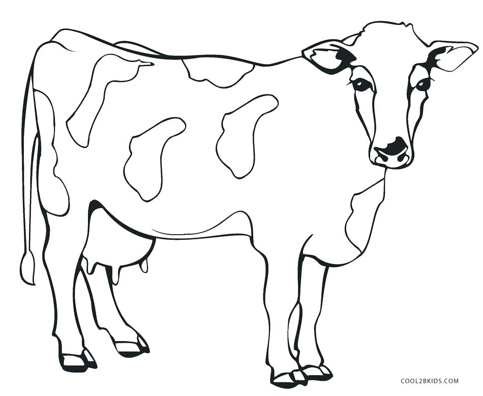 950x778 Baby Cow Coloring Pages