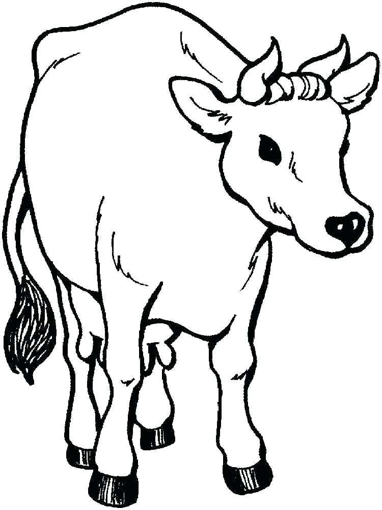 750x1000 Coloring Pages Cow
