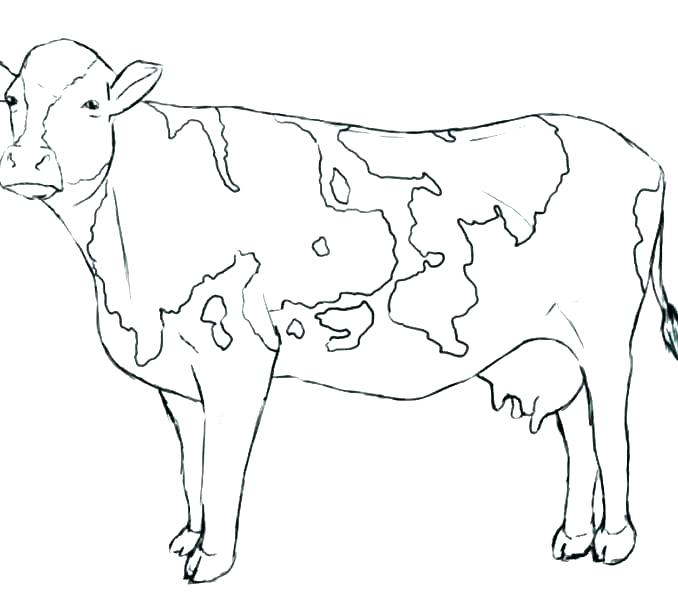 678x600 Cow For Coloring
