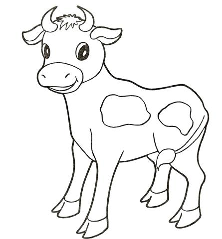 445x480 Baby Cow Coloring Page Free Printable Coloring Pages Cow Pictures