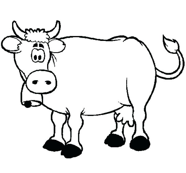 600x558 Cow Coloring Pages Confused Dairy Cow Coloring Pages Coloring