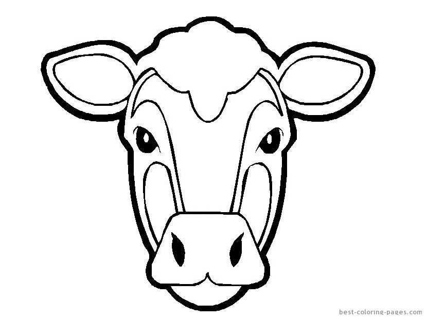 830x623 Cow Coloring Sheet Print This Colouring Page Baby Cow Coloring Cow