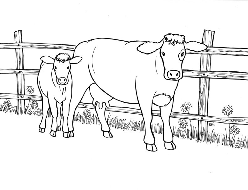 792x607 Cow Coloring Pages Mother And Calf