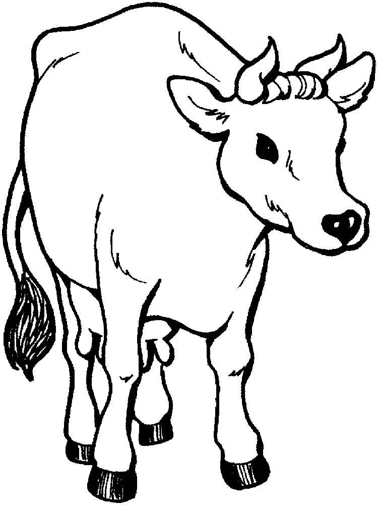 750x1000 Free Printable Cow Coloring Pages For Kids