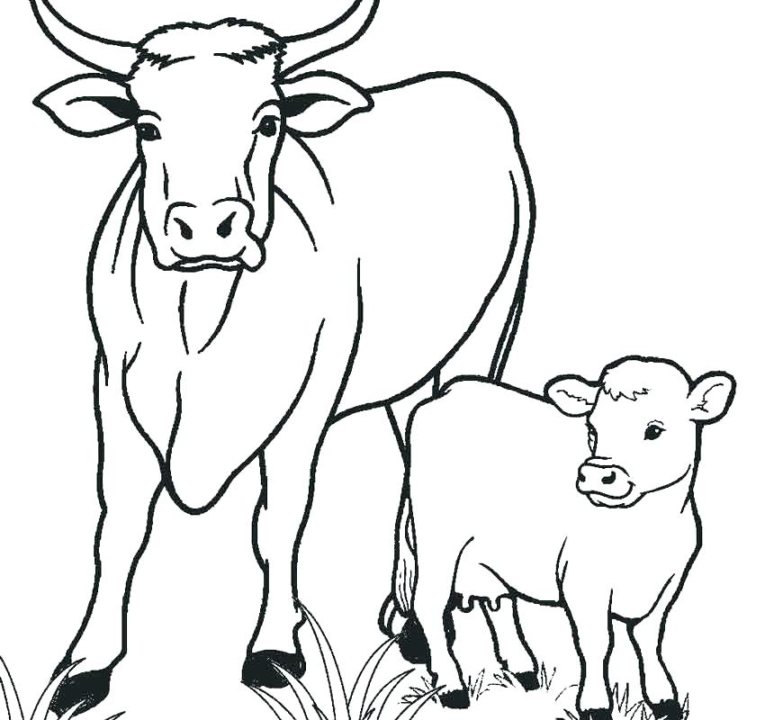 850x800 Coloring Pictures Of Cows