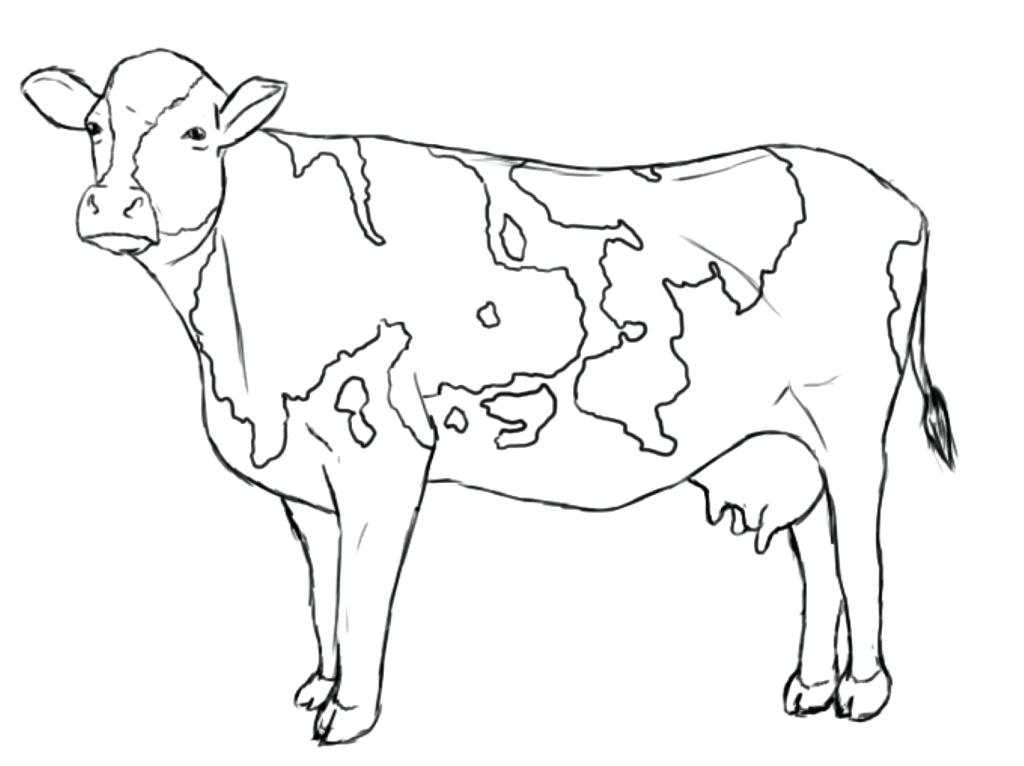 1024x766 Cow Coloring Pages Free Printable Click Clack Moo Cows That Type