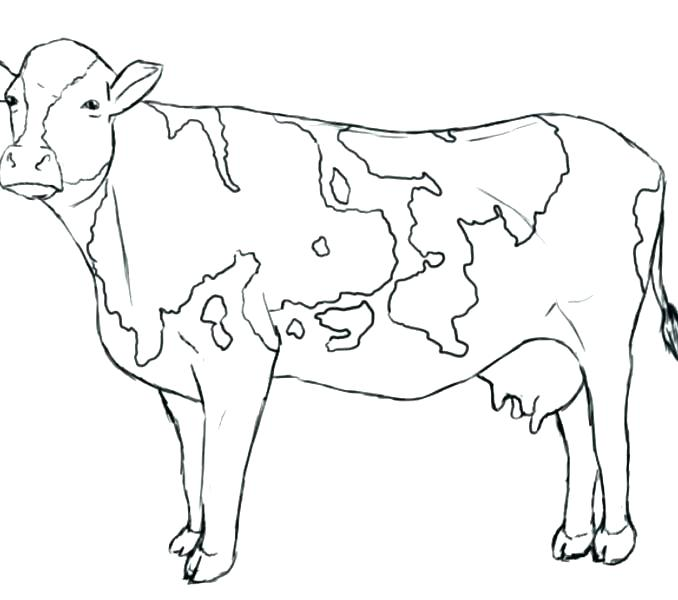 678x600 Cow Coloring Pages To Print Cow Coloring Page Coloring Pages