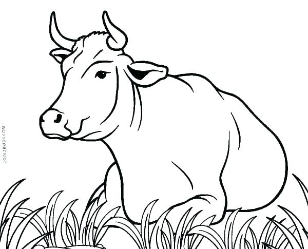 600x485 Cute Cow Coloring Pages Free Cow Coloring Pages Printable Cow
