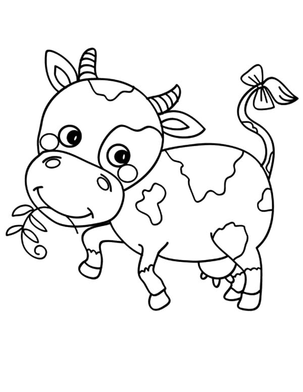 600x775 Baby Cow Coloring Printable