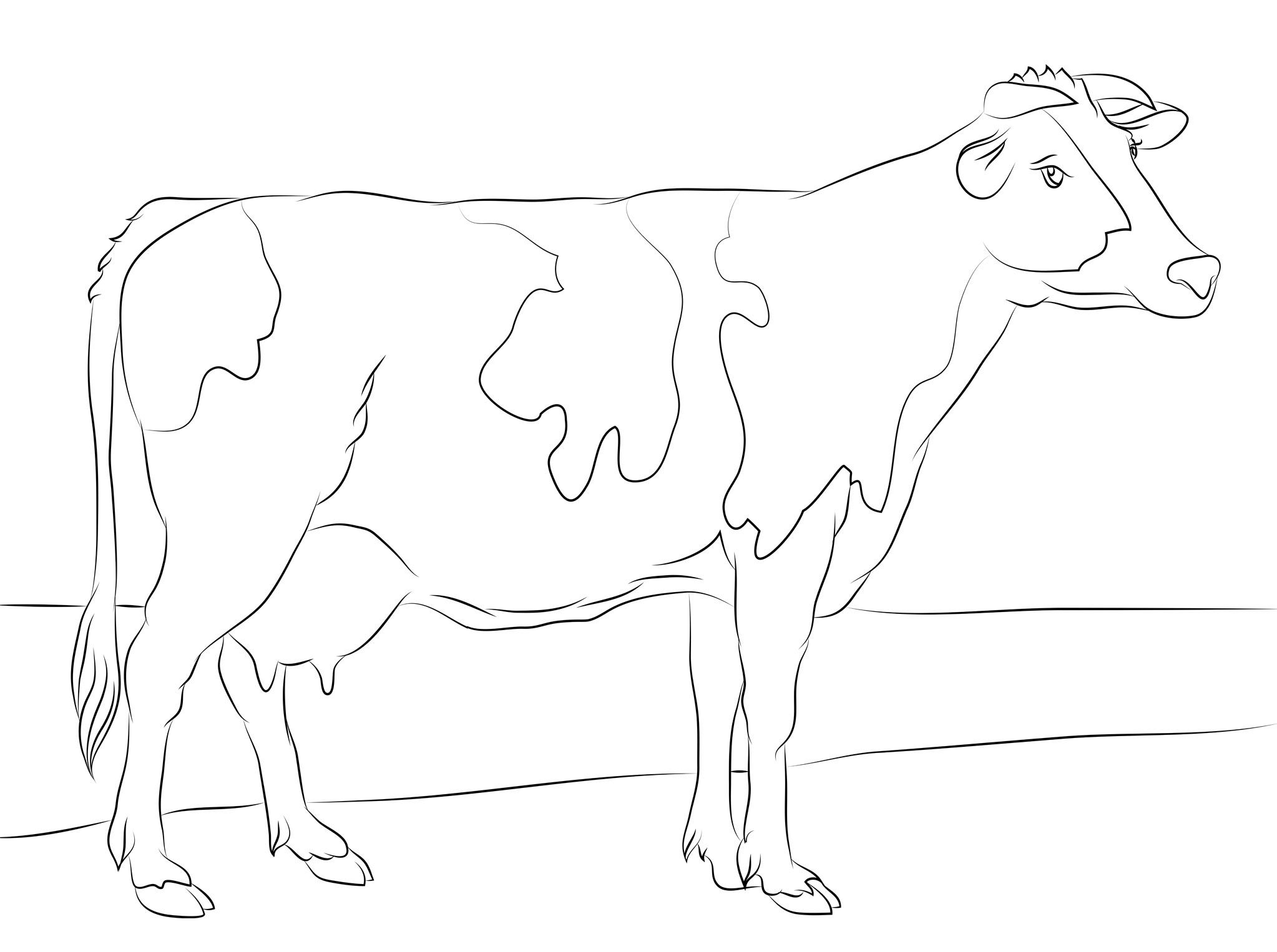 2046x1526 Free Cow Coloring Pages Printable