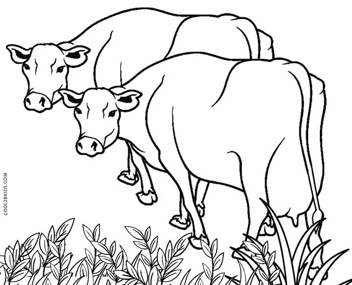 700x567 Free Printable Cow Coloring Pages For Kids