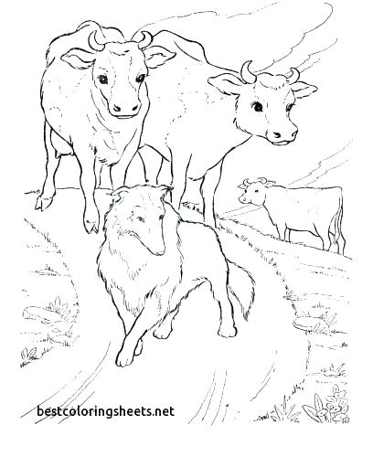 408x500 Cow Coloring Pages For Adults