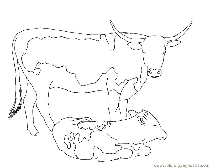 800x642 Coloring Page Cow Coloring Pages Of Baby Cows Coloring Page