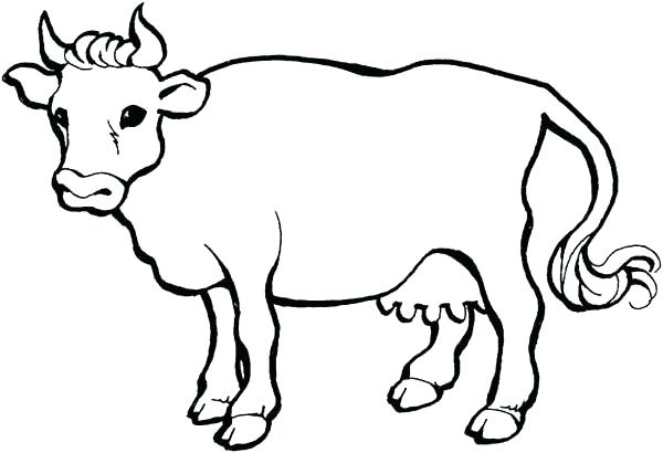 600x410 Coloring Pages Cow Coloring Page Cow Cow And Calf Coloring Pages