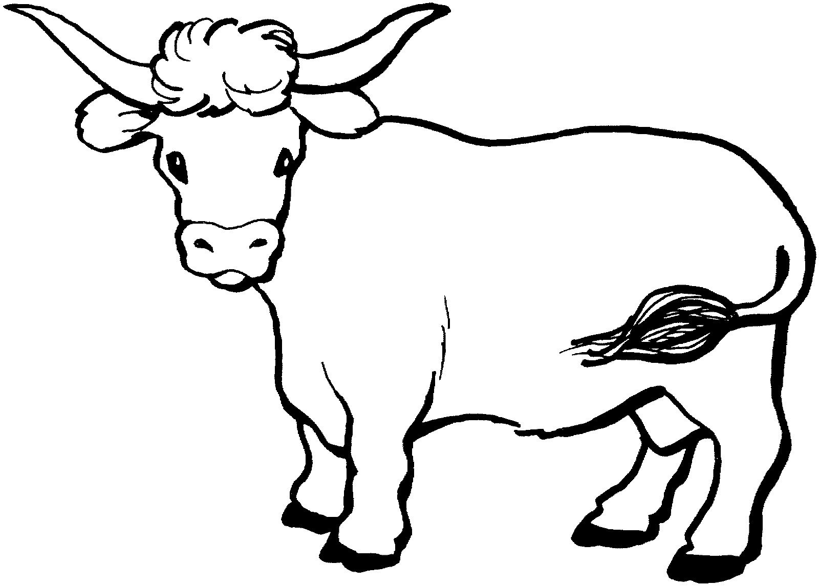 1600x1145 Cow Cattle Coloring Page Best Is Pages Printable Animals Longhorn