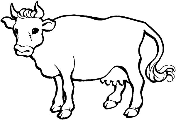 600x410 Drawn Cattle Coloring Page