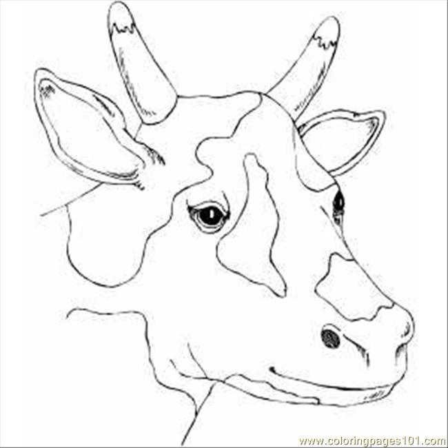 650x650 Spotty Cow Head Coloring Page