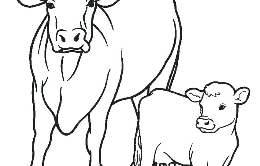 850x544 Printable Coloring Pages Easter Cow Cattle Free Is Animals Drive