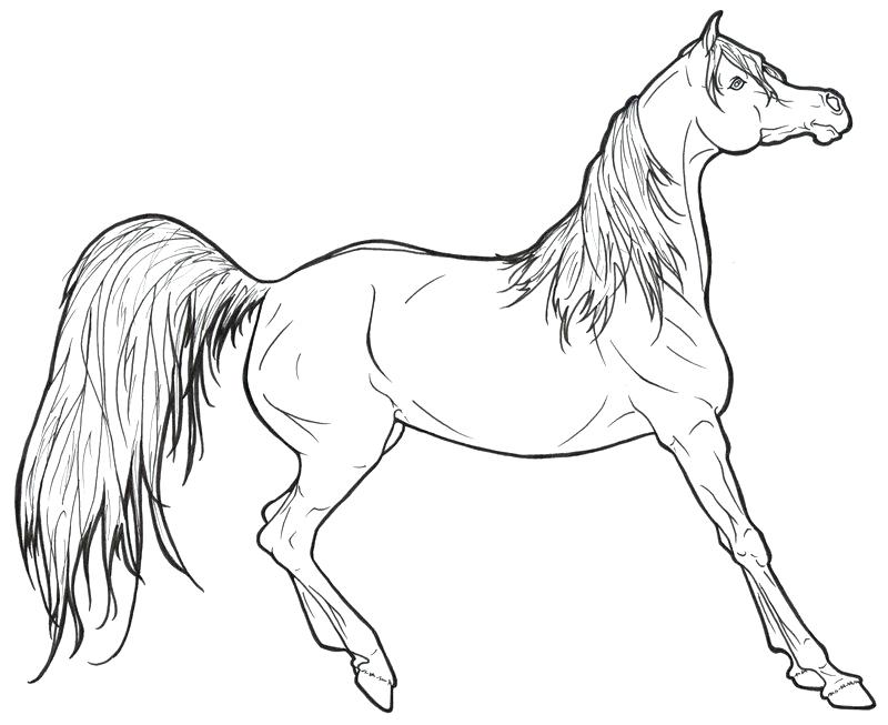 800x653 Free Horse Coloring Pages