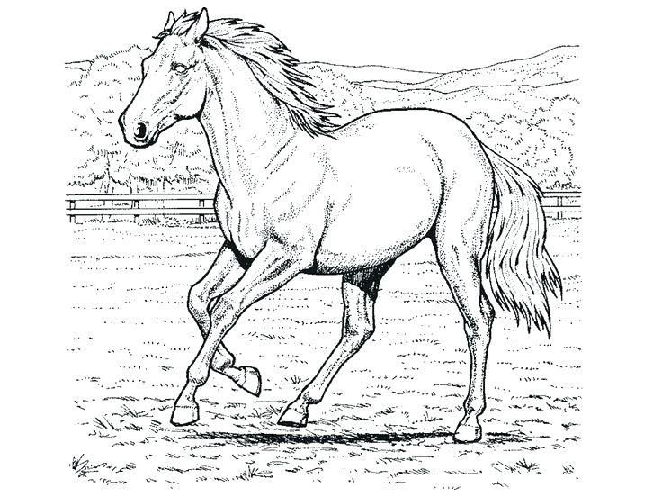 736x552 Horse Pictures To Color Coloring Pages Horse Color Page