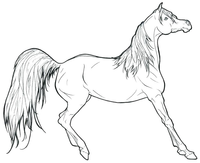 800x653 Cowboy Horse Coloring Page For Boys Zahlkarte Site