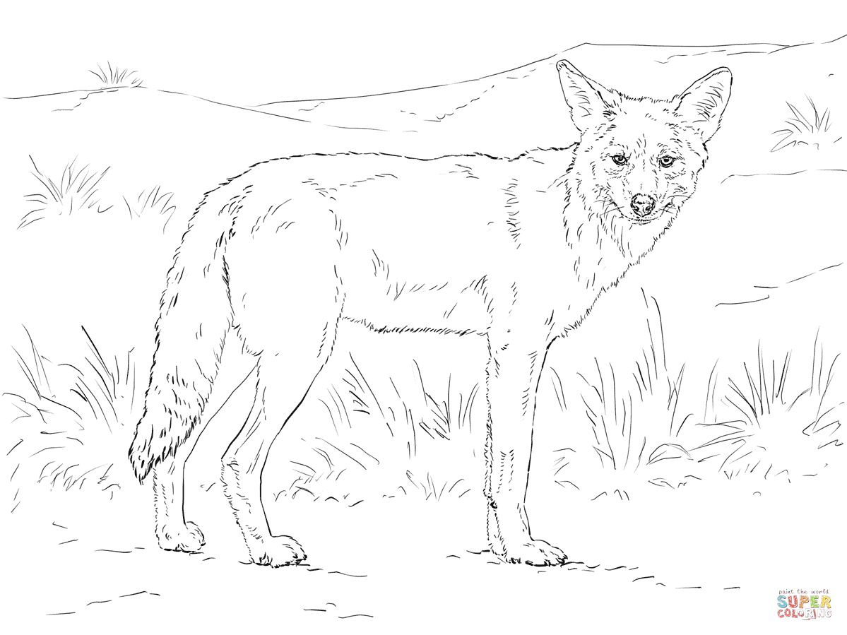 1199x899 Coyote Coloring Page Free Printable Coloring Pages Coyote Coloring