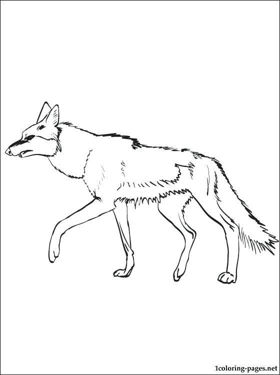 560x750 Coyote Coloring Page Coyote Coloring Page For Free Wile Coyote