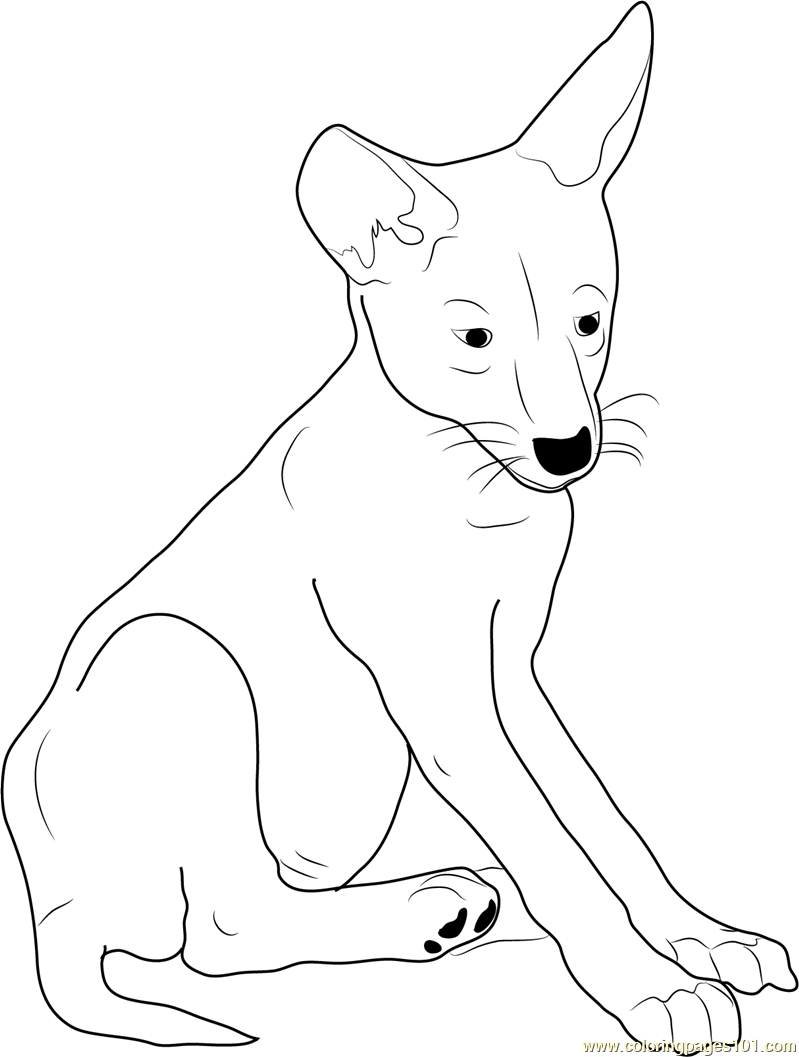 799x1057 Coyote Coloring Pages