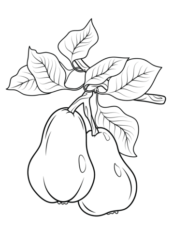 358x480 Cranberry Coloring Page
