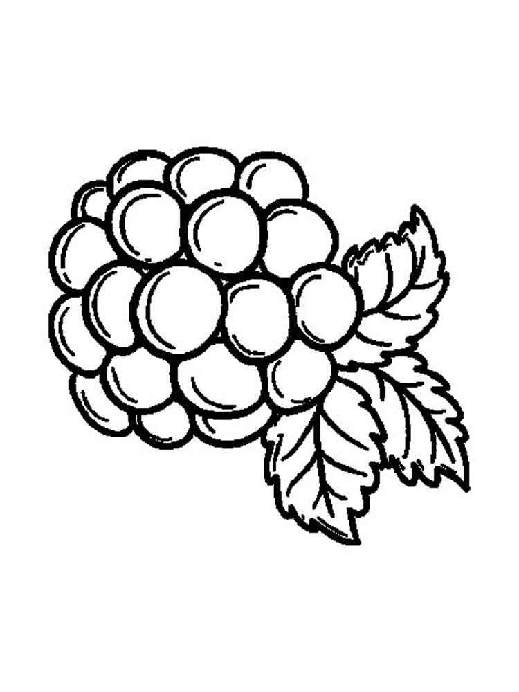 750x1000 Free Printable Blackberry Coloring Pages For Kids
