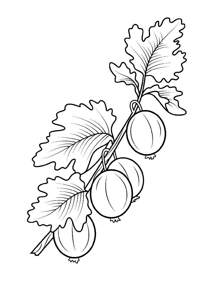 750x1000 Gooseberry Coloring Pages Download And Print Gooseberry Coloring