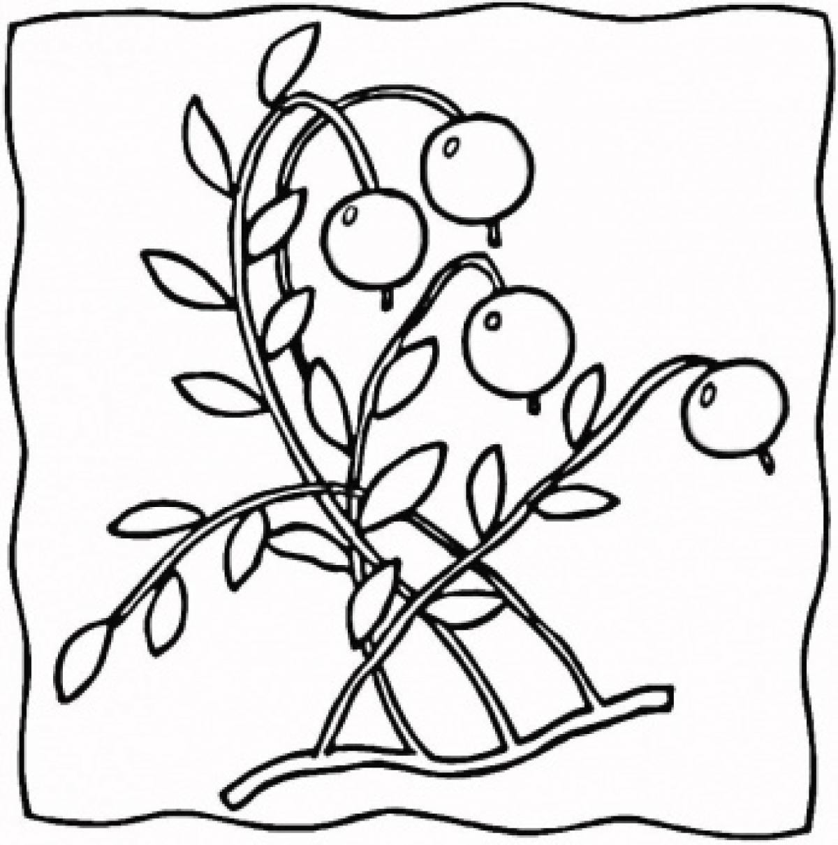 1200x1210 Ontario Berry Growers Association For Kids