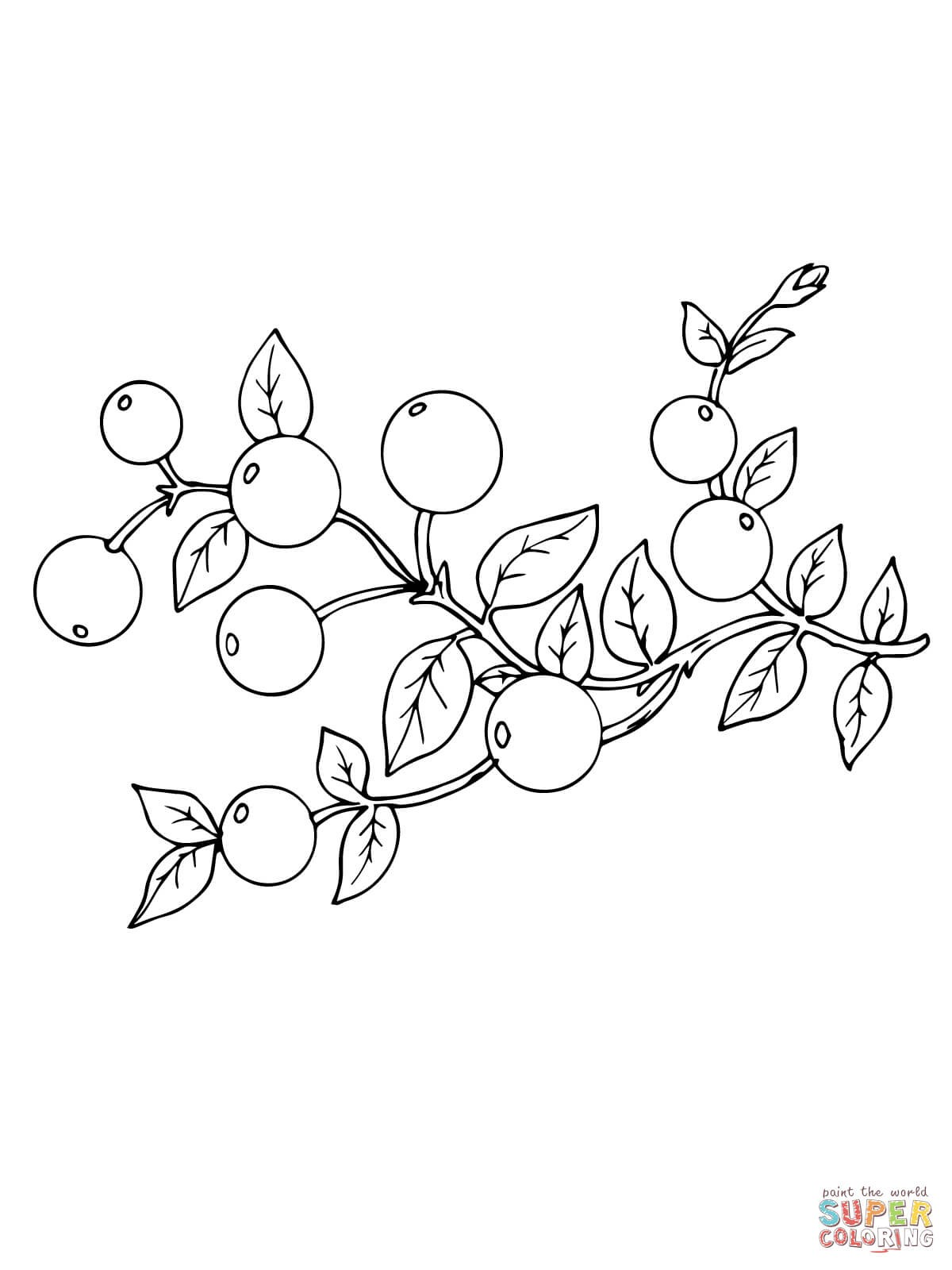 1200x1600 Clanberry Fruits And Berries Coloring Pages For Kids New Cranberry