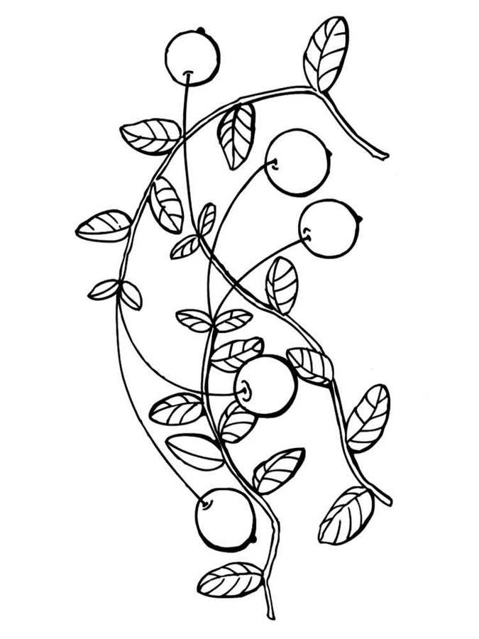 675x900 Coloring Pages Cranberry, Printable For Kids Adults, Free