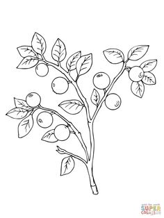 236x314 Common Evening Primrose Or Evening Star Super Coloring Drawing