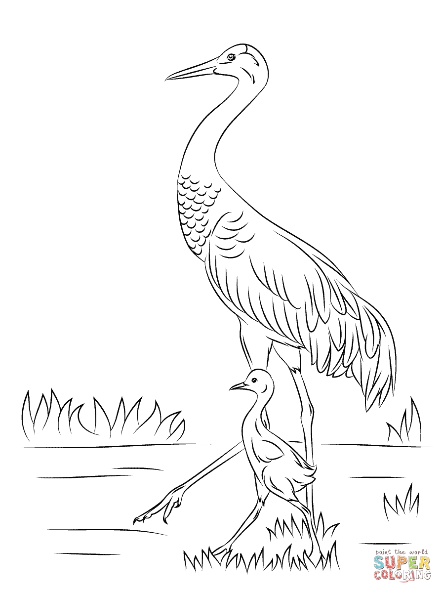 Crane Coloring Pages Printable